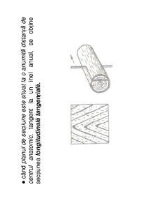 Anatomia Lemnului - Pagina 5