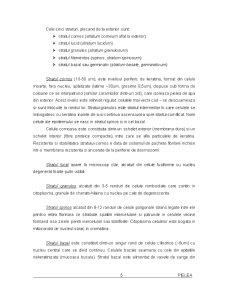 Pielea - Pagina 4