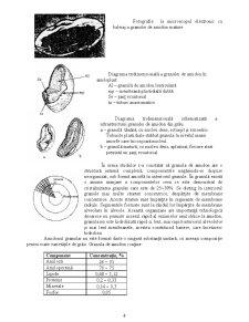 Compoziția chimică a făinii - Pagina 4