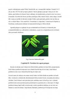Epidemiologia bolilor provocate de Rickettsia - Pagina 5