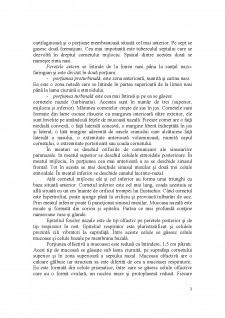 Sistemul respirator - Pagina 3