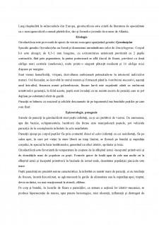 Ihtiopatologie - Boli la pești - Pagina 4