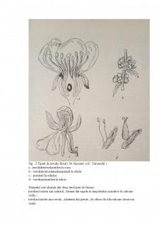 Prezentarea părților componente ale unei flori - Pagina 4