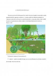 Biocenoză - Pagina 2