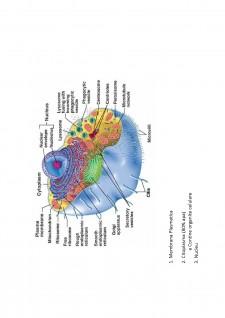 Suport de curs biologie celulara - Pagina 5