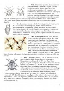 Distributia pe culturi a principalelor insecte daunatoare si metode de combatere - Pagina 4