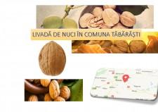 Livada de nuci în comuna Tăbărăști - plan de afaceri - Pagina 1