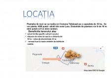 Livada de nuci în comuna Tăbărăști - plan de afaceri - Pagina 4