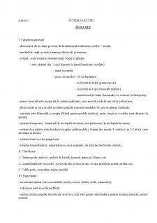 Proiect didactic - Moluștele - Pagina 3
