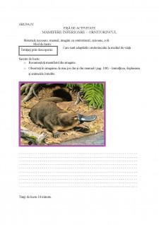 Proiect didactic - ornitorincul - Pagina 4