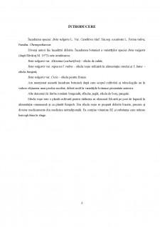 Sfecla roșie - Pagina 2
