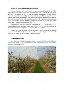 Înființarea unei plantații de cireș în zonă comunei Dracsenei, județul Teleorman - Pagina 4