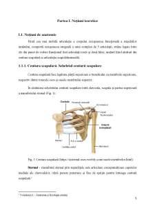 Impactul kinetoterapiei asupra pacienților cu periartrită scapulo-humerală - Pagina 5