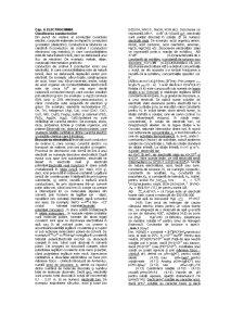 Electrochimie - Pagina 1