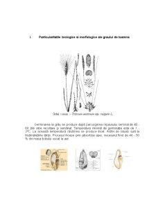 Particularitati Biologice si Morfologice - Grau, Porumb, Soia - Pagina 1