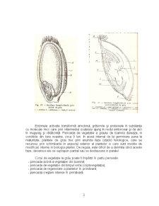 Particularitati Biologice si Morfologice - Grau, Porumb, Soia - Pagina 2