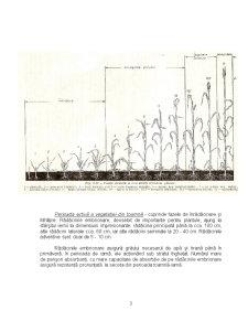 Particularitati Biologice si Morfologice - Grau, Porumb, Soia - Pagina 3
