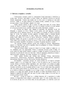Ingrijirea Plantelor - Pagina 1