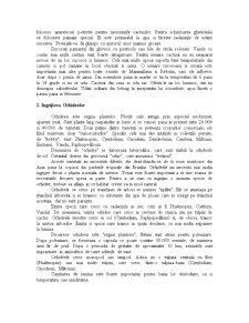 Ingrijirea Plantelor - Pagina 4