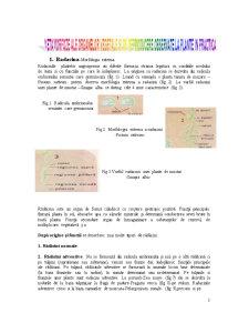 Organe Vegetative - Pagina 1