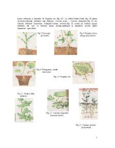 Organe Vegetative - Pagina 2