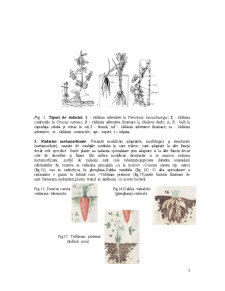 Organe Vegetative - Pagina 3