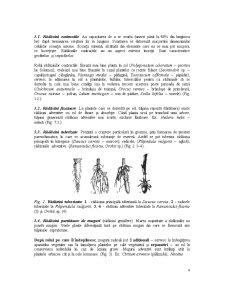 Organe Vegetative - Pagina 4