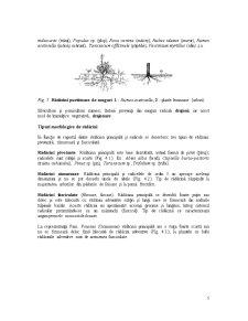 Organe Vegetative - Pagina 5