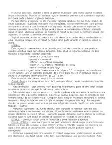 Anatomia Aparatului Genital - Pagina 3