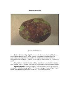 Nucul - Pagina 5