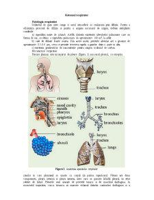 Sistemul Respirator - Pagina 1