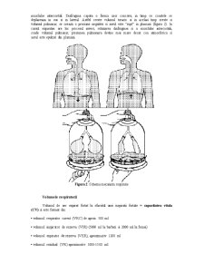 Sistemul Respirator - Pagina 2