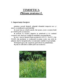 Timoftica si Ghizdeiul - Pagina 1