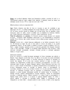 Tennologia de Obtinere a Berii - Pagina 2