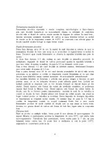 Tennologia de Obtinere a Berii - Pagina 4