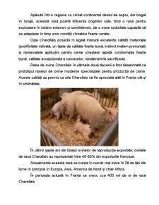 Rasa de Ovine - Charollais - Pagina 2