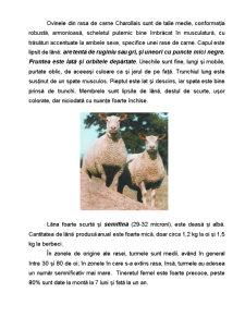 Rasa de Ovine - Charollais - Pagina 3