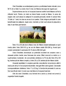 Rasa de Ovine - Charollais - Pagina 4