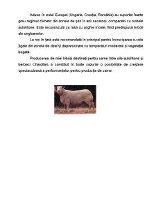 Rasa de Ovine - Charollais - Pagina 5
