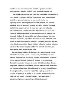 Trichineloza-Zoonoza - Pagina 4