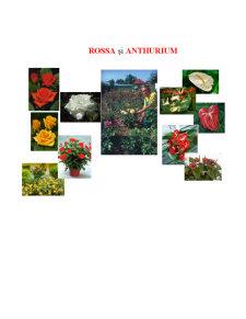 Rossa și Anthurium - Pagina 1