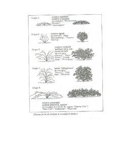 Rossa și Anthurium - Pagina 5