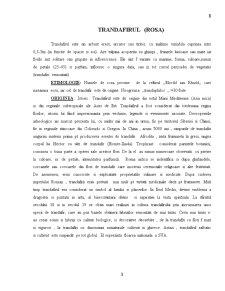 Trandafirul - Pagina 1