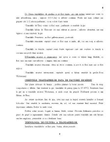 Trandafirul - Pagina 4