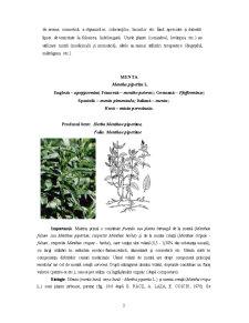 Plante Medicinale și Aromatice - Pagina 3