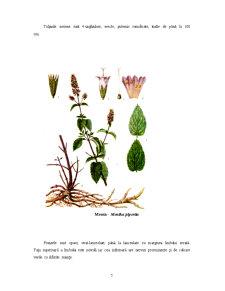 Plante Medicinale și Aromatice - Pagina 5