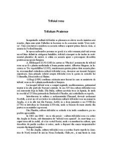 Trifoiul Rosu - Trifolium Pratense - Pagina 1