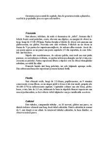 Trifoiul Rosu - Trifolium Pratense - Pagina 4
