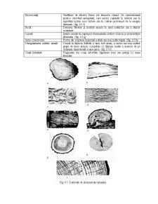 Principalele Defecte ale Lemnului - Pagina 3
