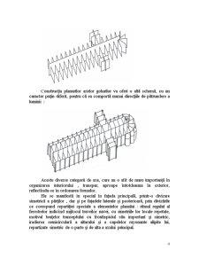 Axele in Arhitectura - Pagina 4